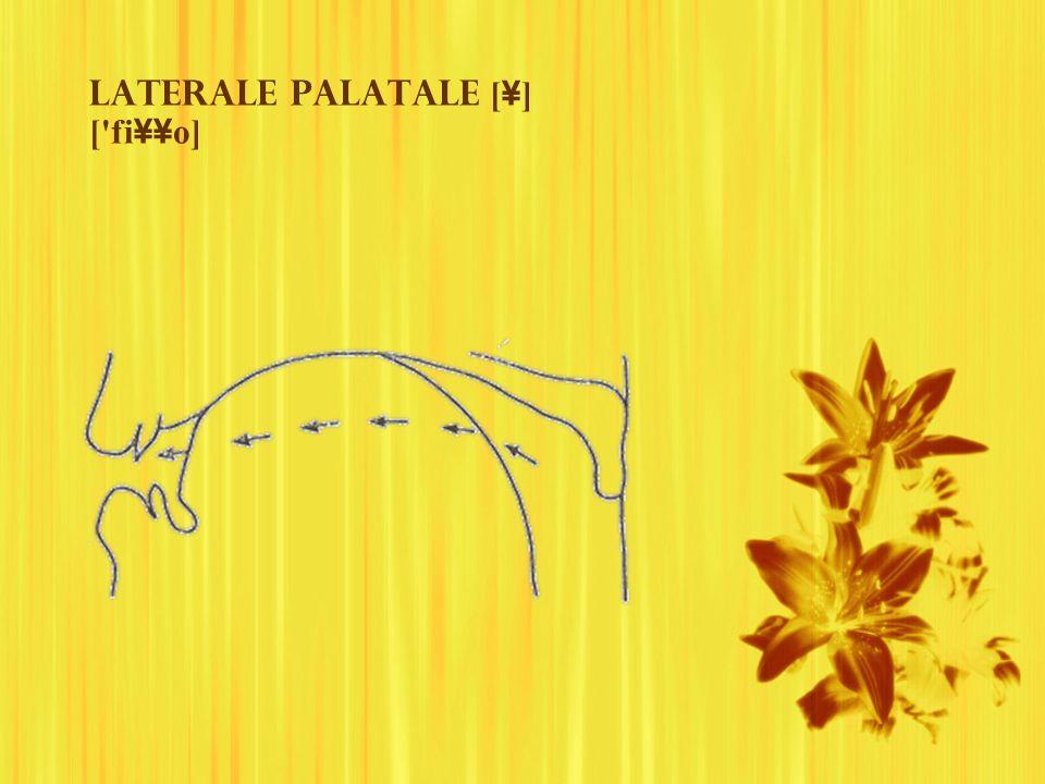 Laterale palatale [¥] [ fi¥¥o]